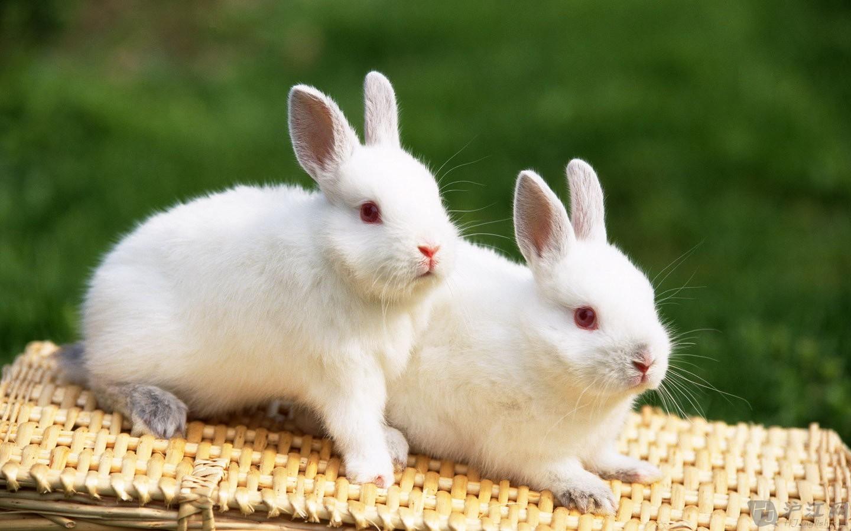 小兔子照片可爱